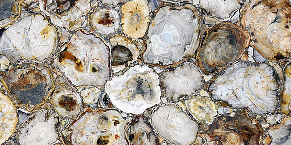 Akam Petrified Wood