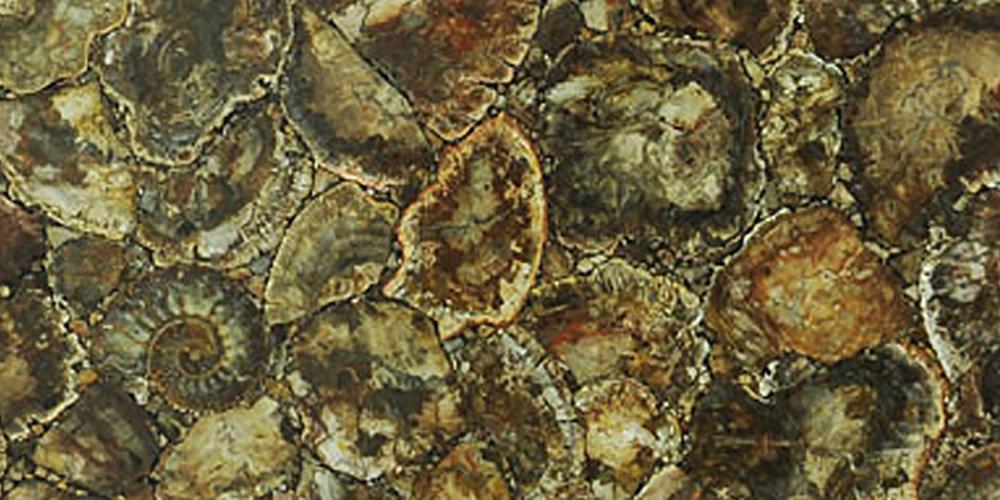 Akam Petrified Wood Fossil
